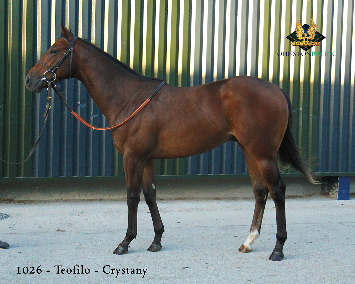 Chestnut Colt by Teofilo out of Crystany