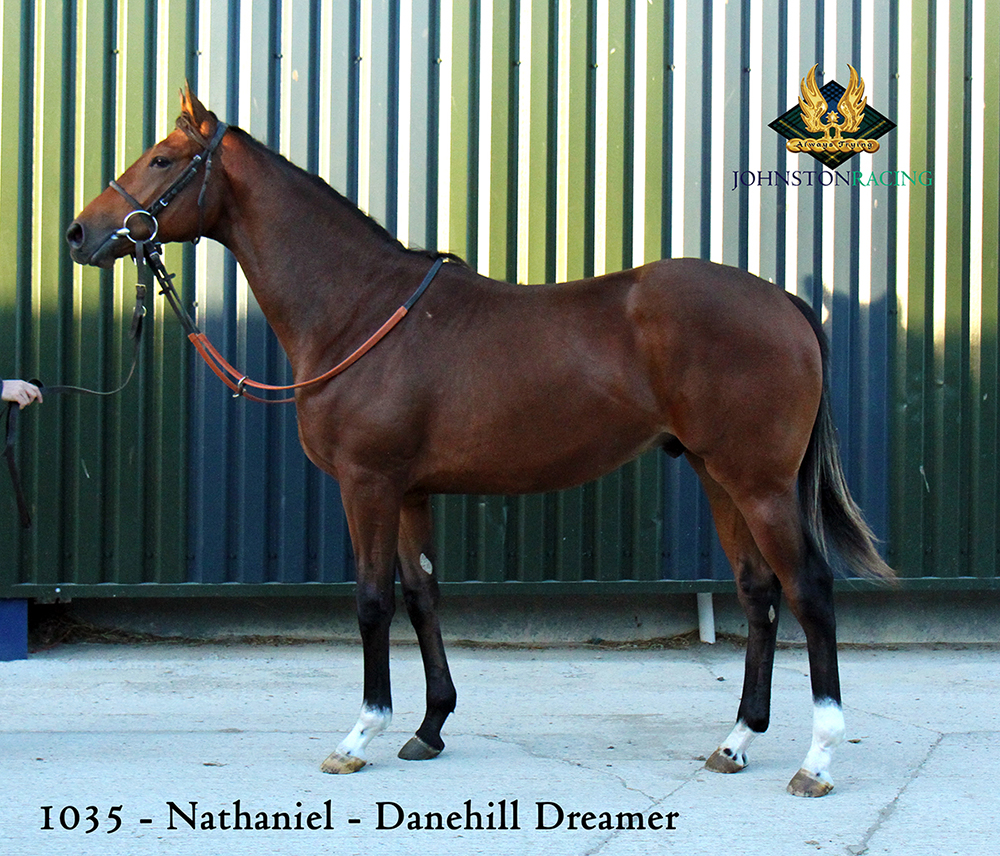 Bay Colt by Nathaniel out of Danehill Dreamer