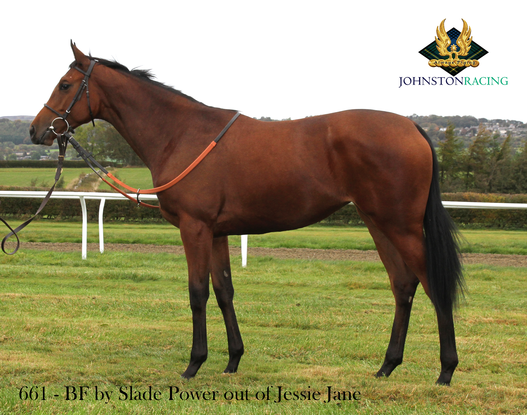 Bay Filly by Slade Power out of Jessie Jane