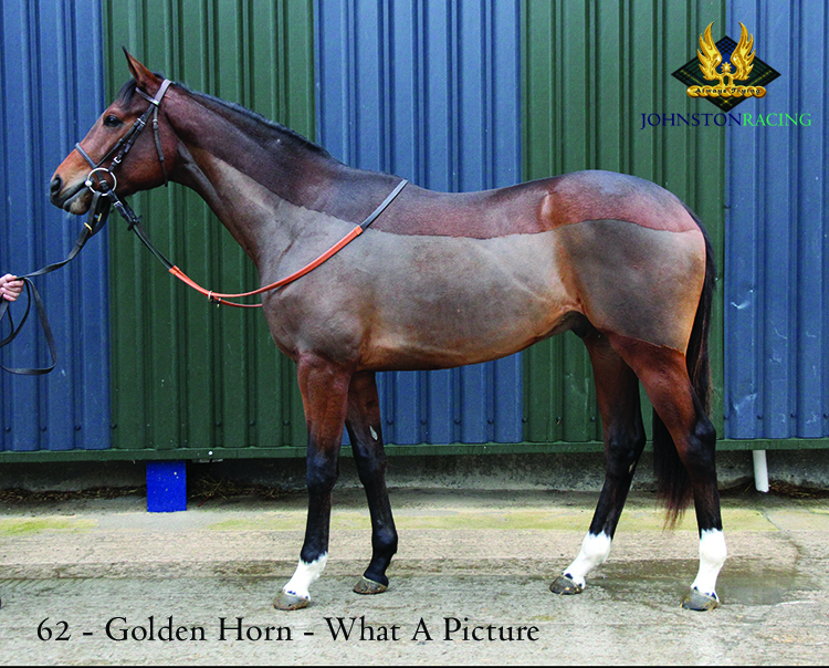 Bay Colt by Golden Horn out of What A Picture