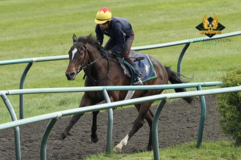 Punjraj Singh mark johnston racing