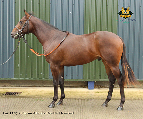 1185 B C by Dream Ahead out of Double Diamond
