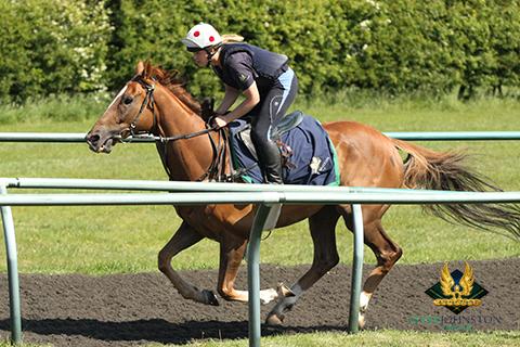 Hope Willis mark johnston racing