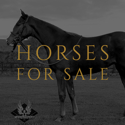 horses yearlings for sale mark johnston