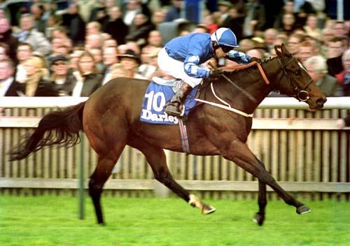 Shamardal mark johnston racing